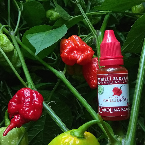 CHILLI DROPS - Carolina Reaper